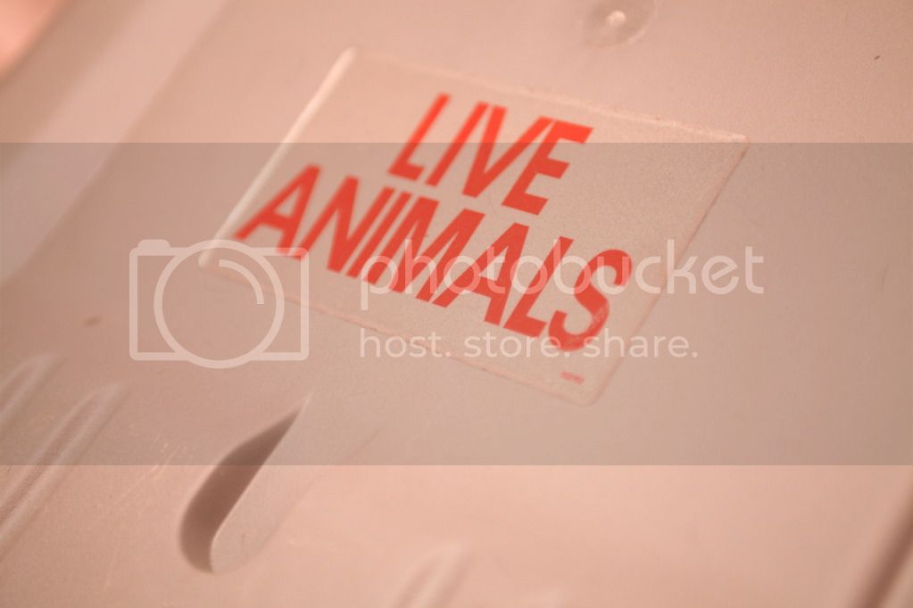 Live Animals Sticker for Flying