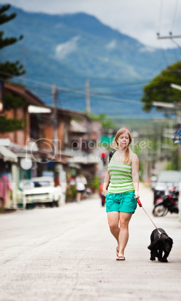 traveling with a dog in Thailand 