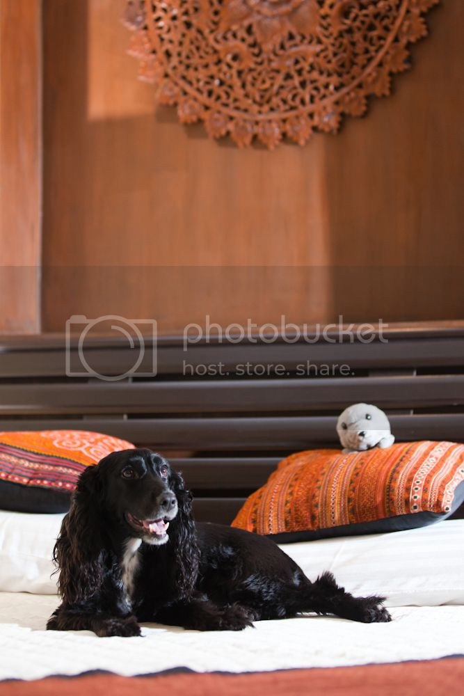 Pet friendly hotel, Pai