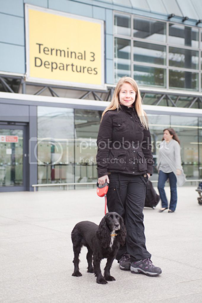 Dog at Heathrow airport, exporting a dog to thailand